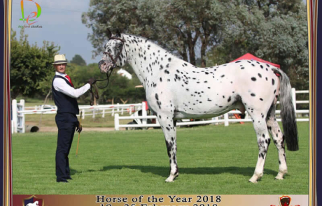 white horse of the year 2018