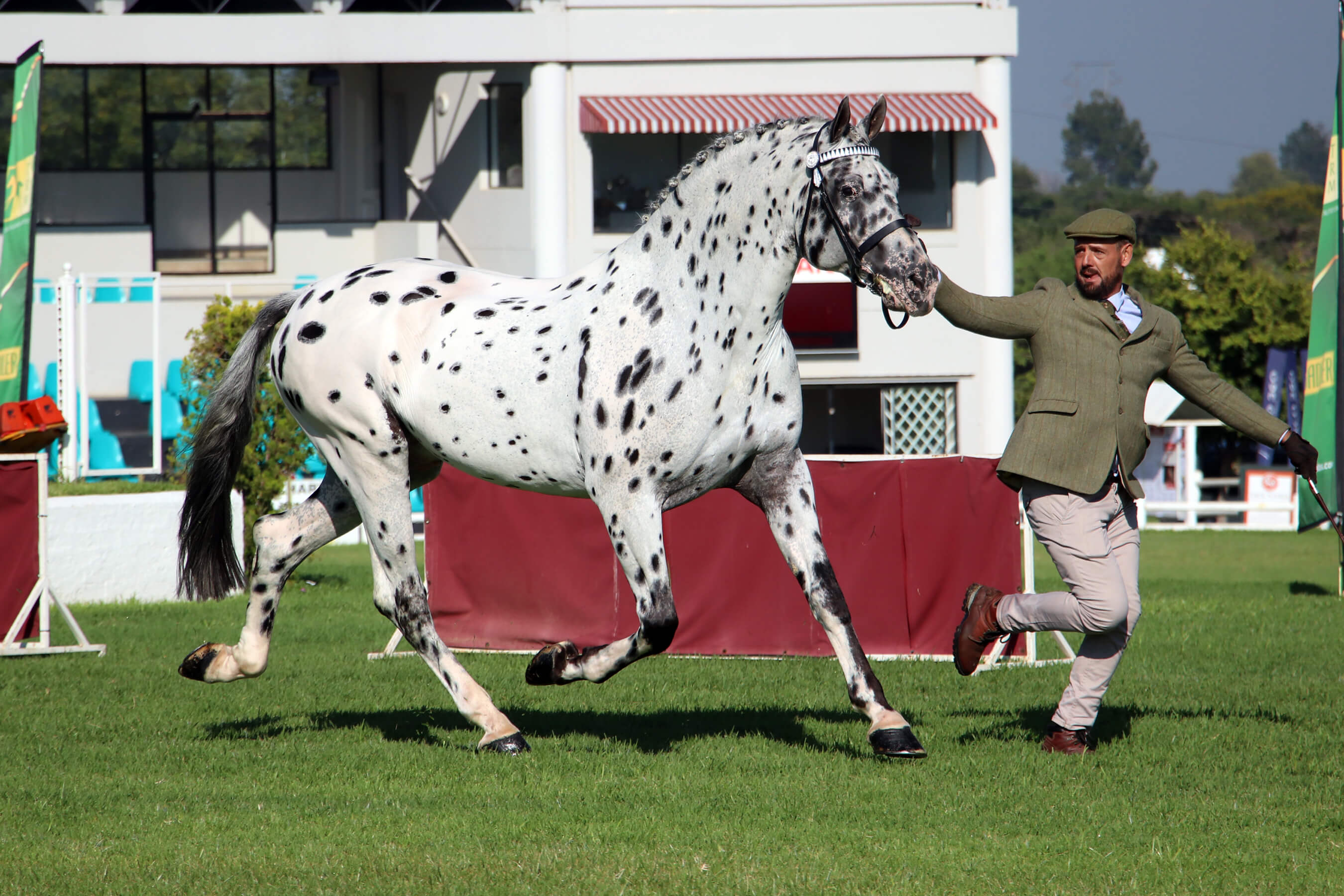 Stallions | Two Moons Appaloosa Stud