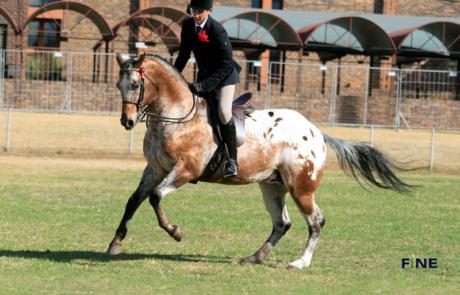 brown horse rider